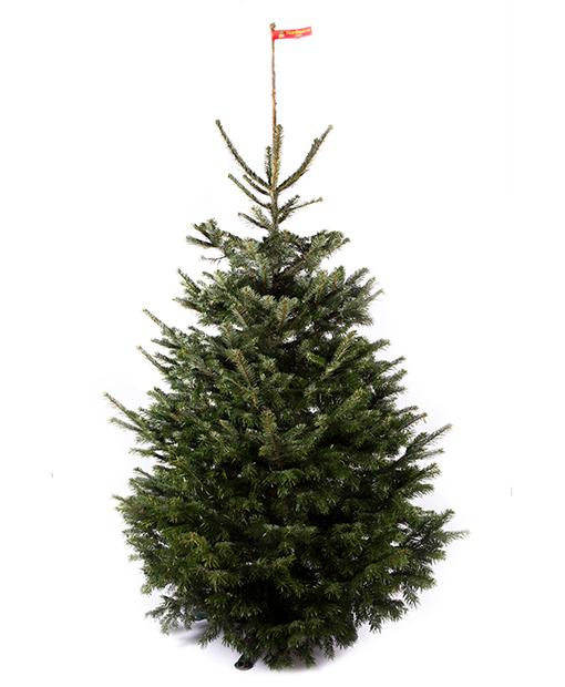 Kalėdinė eglutė kėnis